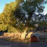 Tent pitched under a large tree