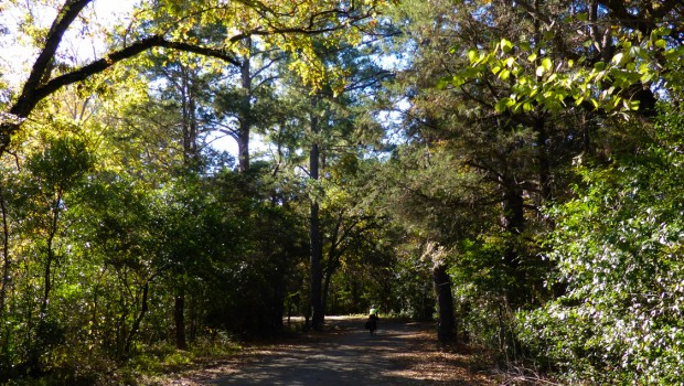 Leaf littered trail through trees in Bastrop State Park, TX