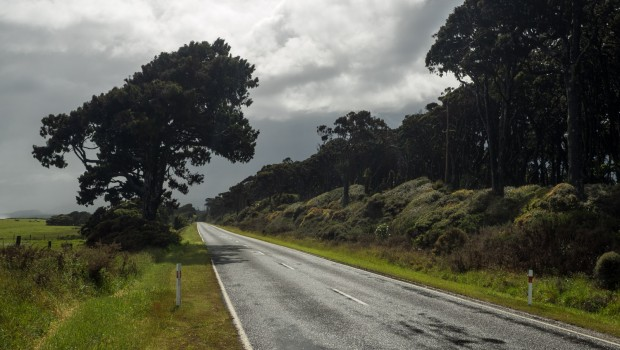 New Zealand Highway 6 after a rainstorm, a tree by the side of the road, clouds in the distance