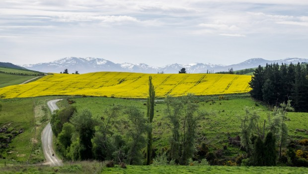 Yellow fields in background, green fields in foreground, mountains in the distance